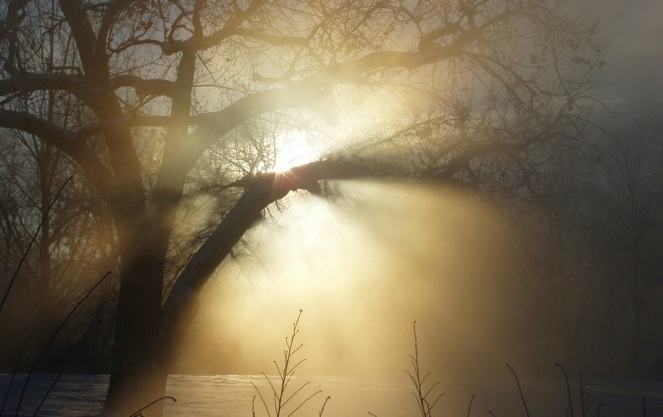 sun-flare-through-tree