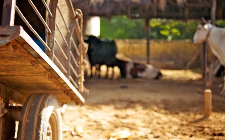 ox-cart-bokeh